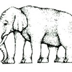 The Elephant Illusion